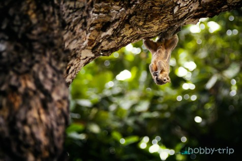 Squirrel eating - picture of Nusa Dua, Bali