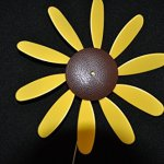 Classic-Spinning-Daisy-x6-case-SUNFLOWER-12-inch-dia-0-2