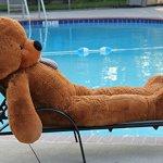 Joyfay-78-Giant-Teddy-Bear-Dark-Brown-Valentines-Gift-0-0