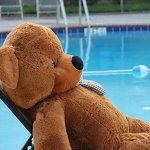 Joyfay-78-Giant-Teddy-Bear-Dark-Brown-Valentines-Gift-0-1