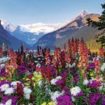 Ravensburger-Flowery-Mountains-Puzzle-3000-Piece-0-0