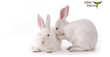 Como bañar un conejo con agua