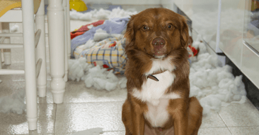 Consejos para evitar que tu perro destroce la casa