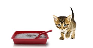 Cómo hacer arena para gatos casera con papel de periódico