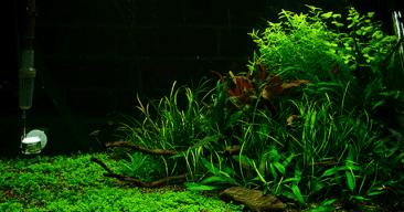 Cómo colocar y distribuir las plantas del acuario