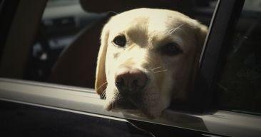 Cómo evitar que el perro se maree en el coche