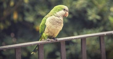 ¿Cómo puedo saber si mi pájaro está enfermo?