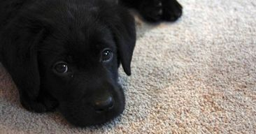 ¿Qué necesito antes de tener un perro?