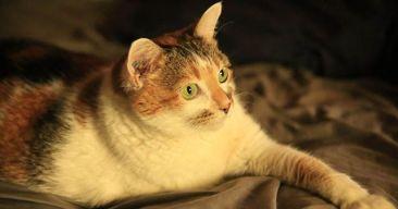 5 formas de reducir el estrés de nuestro gato