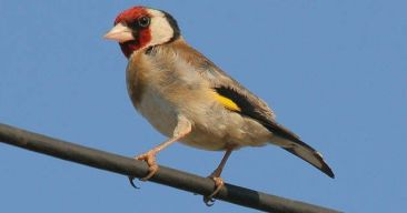 Consejos para desparasitar a nuestras aves