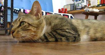 Consejos para que tu gato esté seguro en casa