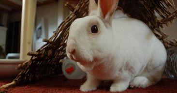 Consejos para evitar que el conejo muerda los cables