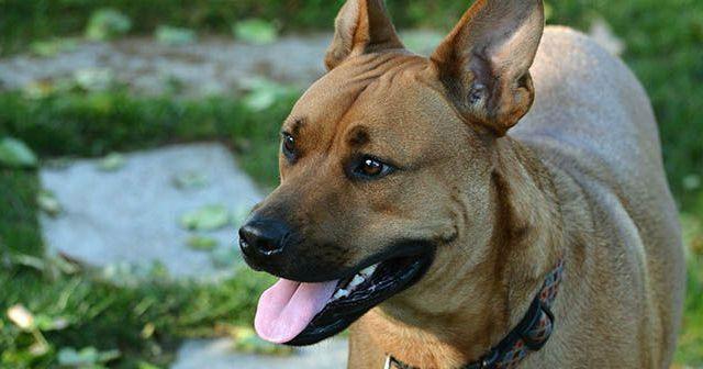 consejos-para-educar-a-un-perro