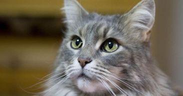 ¿Existen trucos para hacer que mi gato me quiera más?
