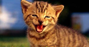 Cuidados básicos para que nuestro gato sea feliz