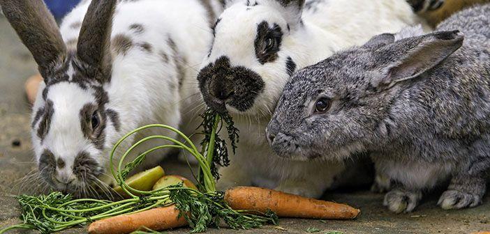¿Por qué mi conejo no come?