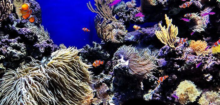 ¿Cuál es la temperatura ideal para un acuario marino?