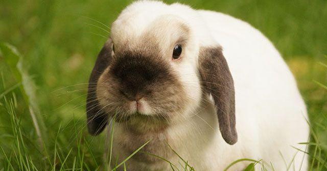 guia-de-inicio-para-tener-conejos-como-mascota-hobby-mascotas