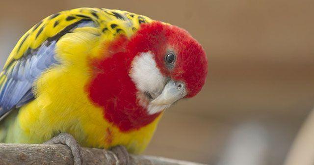 5-consejos-para-que-nuestras-aves-sean-felices-hobby-mascotas