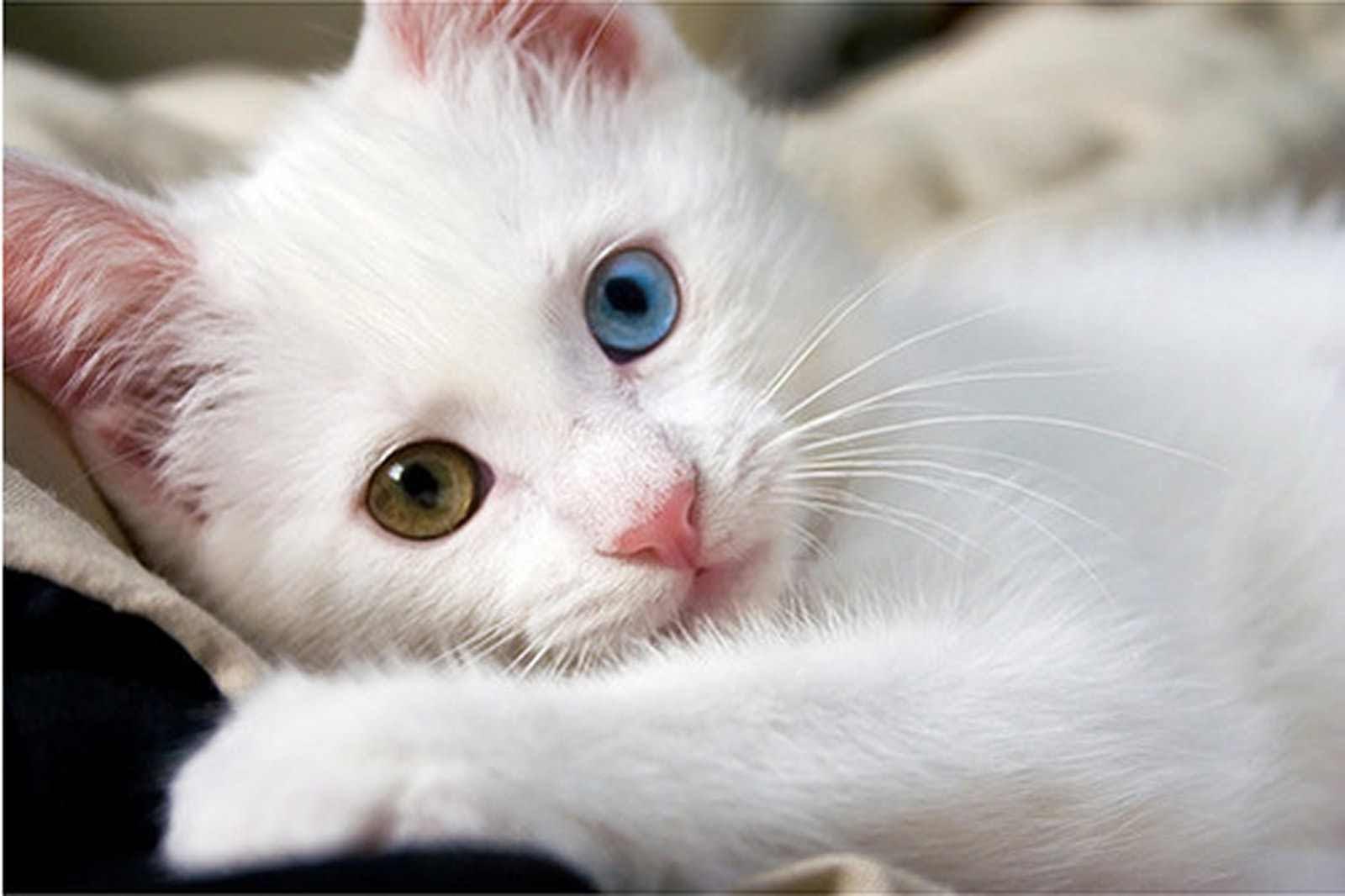 اجمل الصور للقطط في العالم احلي صور قطط حبيبي