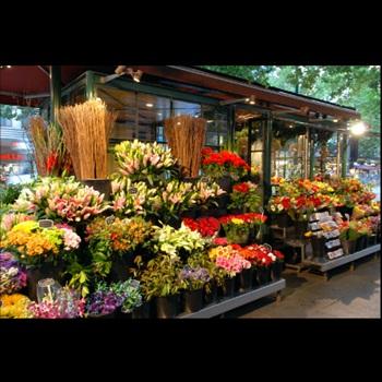 toko bunga surabaya bunga papan paling murah