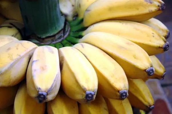 pisang kepok untuk pleci