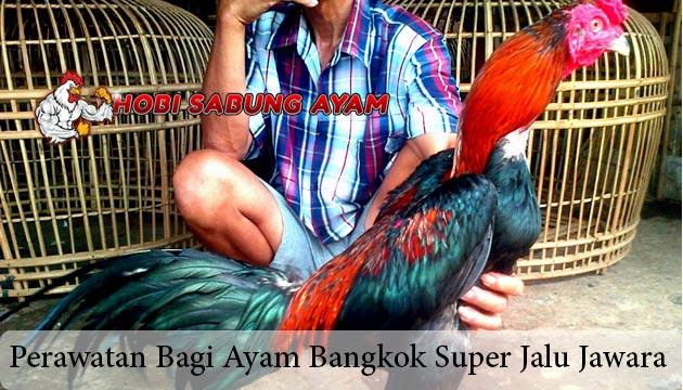 Ayam Bangkok Super Jalu