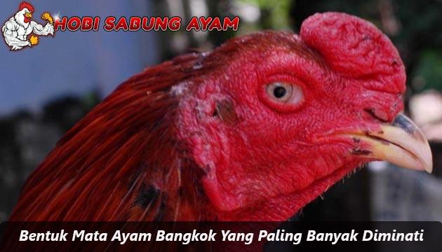 Bentuk Mata Ayam Bangkok