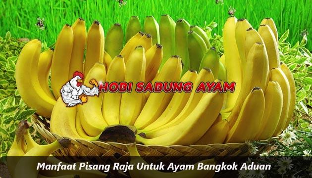 manfaat pisang raja