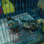 Ayam Batik Itali di Terima dengan Selamat di Kebun Baru, Tebet, Jakarta Selatan