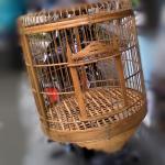 Foto Terbaru Kandang Ayam Bekisar atau untuk Kandang Ayam Hias Lain
