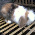 Fuzzy Lop
