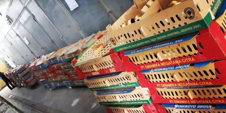 Penjualan DOC Ayam Kampung Super untuk Daerah Samarinda