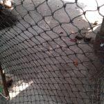 Cara Hemat Menggunakan Jaring Kandang Ayam untuk Kandang Burung Merpati yang Praktis