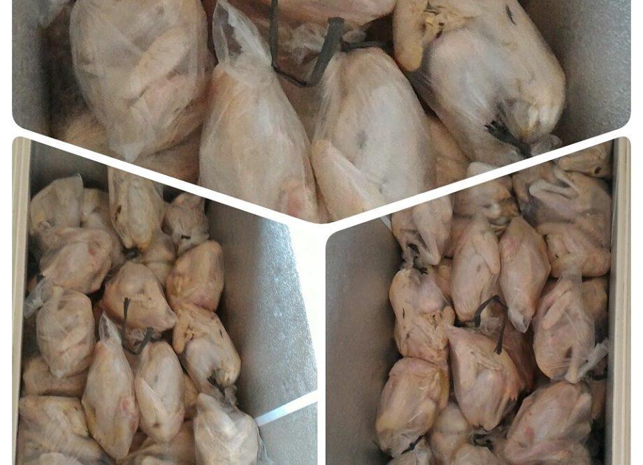 Penyebab dan Cara Mengatasi Dehidrasi Pada DOC Ayam ...