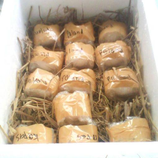 Telur dalam Kotak Sterofoam