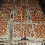 Telur Ayam Kampung Super