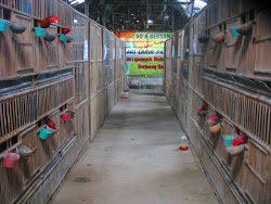 Kandang Ayam Kampung