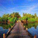 Harga Jual DOC atau Bibit Ayam Kampung Super (JOPER) untuk Daerah Ambon Maluku