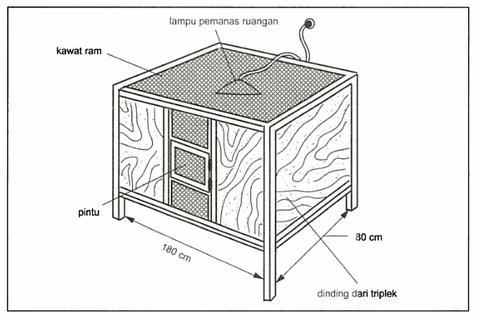 Berikut adalah salah satu contoh design kandang boks untuk pemeliharaan bebek usia Starter