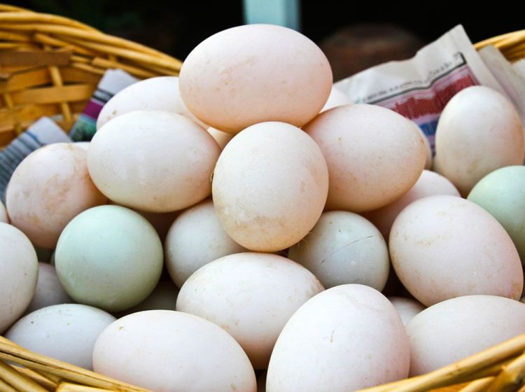 Telur Bebek Hibrida