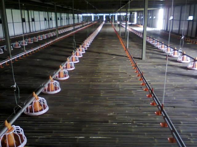 Sebelum kandang digunakan untuk ternak Ayam Joper perternak perlu membersihkannya telebih dahulu | gambar 2