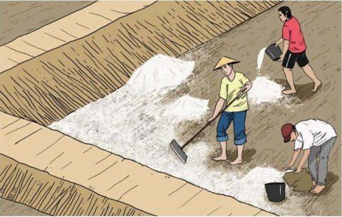 Proses Pengapuran Kolam Tanah dalam ternak lele pemula