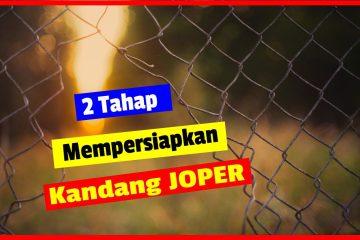 2 tahap mempersiapkan kandang JOPER
