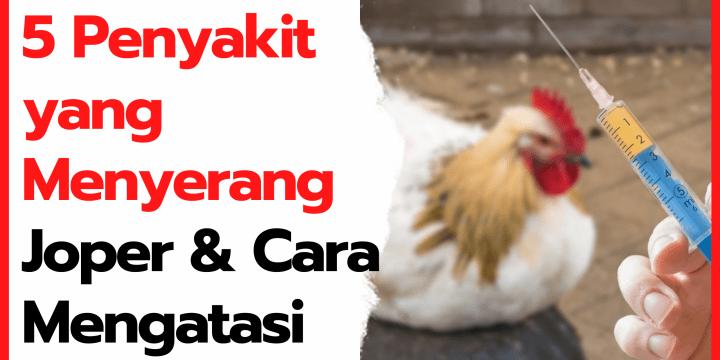 5 Penyakit yang Menyerang Ayam Kampung Super dan Cara Mengatasinya