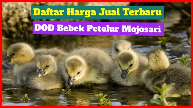 Bebek Mojosari merupakan bebek petelur dengan jumlah produksi telur nya yang cukup tinggi