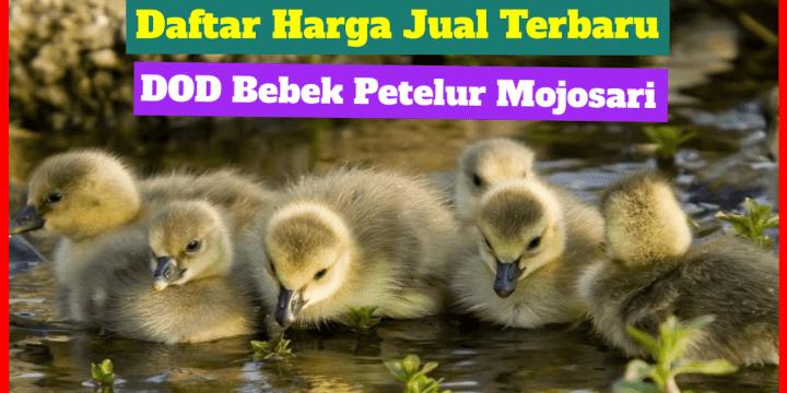 Daftar Harga Terbaru DOD Bebek Petelur Mojosari di Tahun 2020