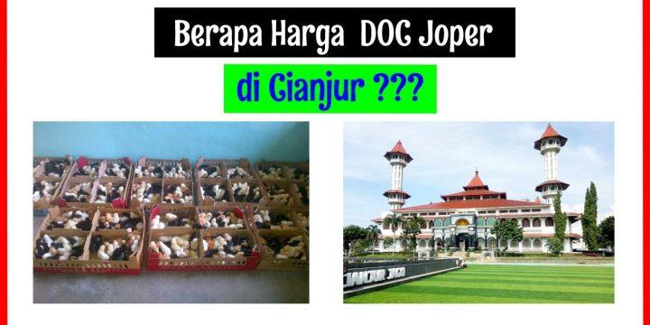 Berapa Harga DOC Ayam JOPER di Cianjur ?