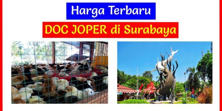 Simak!!! Harga Terbaru DOC Ayam JOPER di Surabaya, Jawa Timur