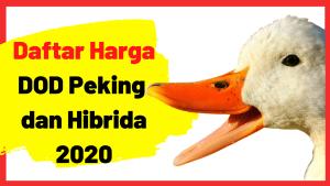 Bebek Peking dan Hibrida memang salah satu jenis bebek penghasil daging dengan masa panen yang singkat, yakni hanya membutuhkan waktu 45 hari panen. Harga DOD nya pun cukup terjangkau